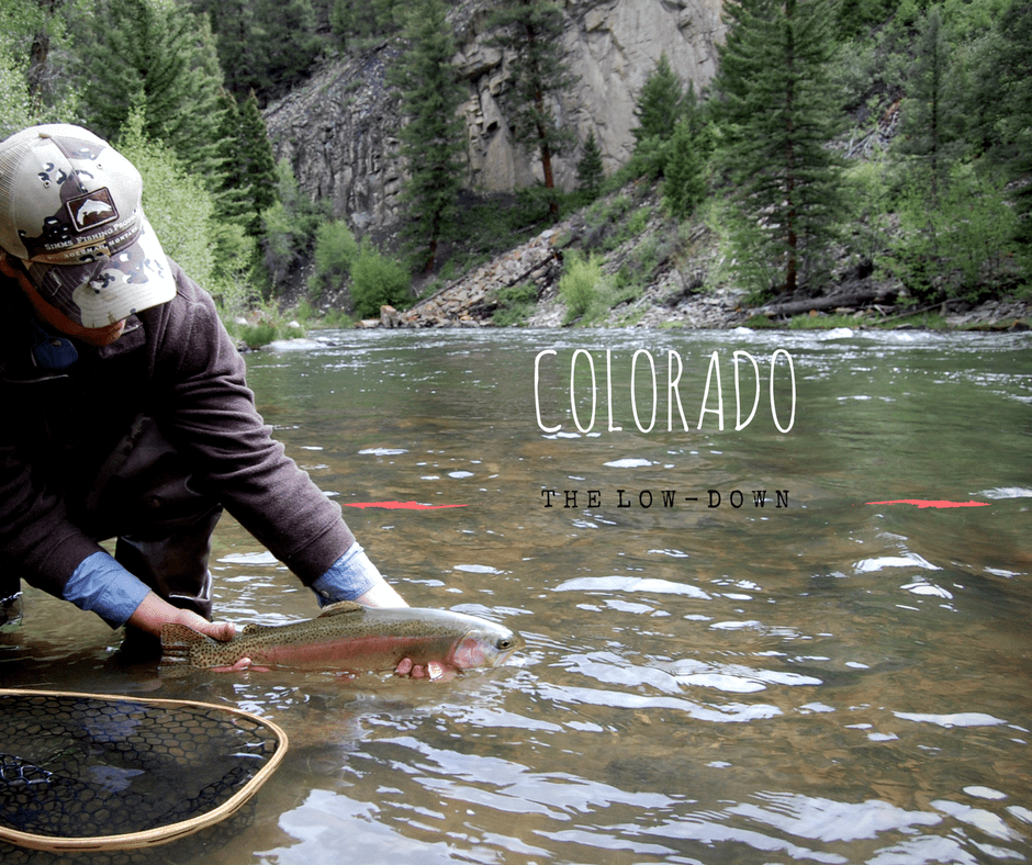 The low down eagle river fly fishing report colorado for Colorado river fly fishing