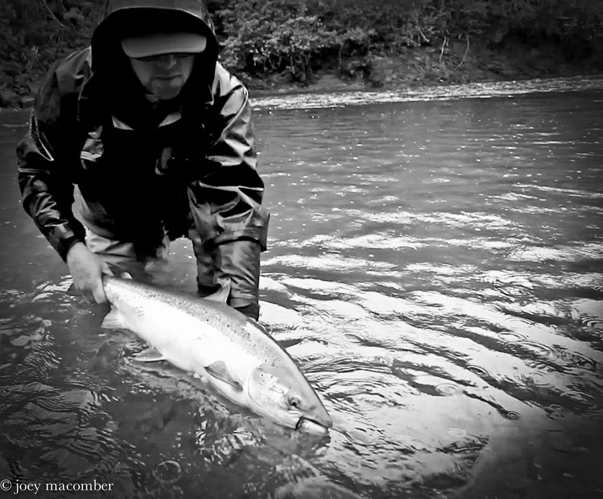 Releasing a Dartmouth River Atlantic Salmon