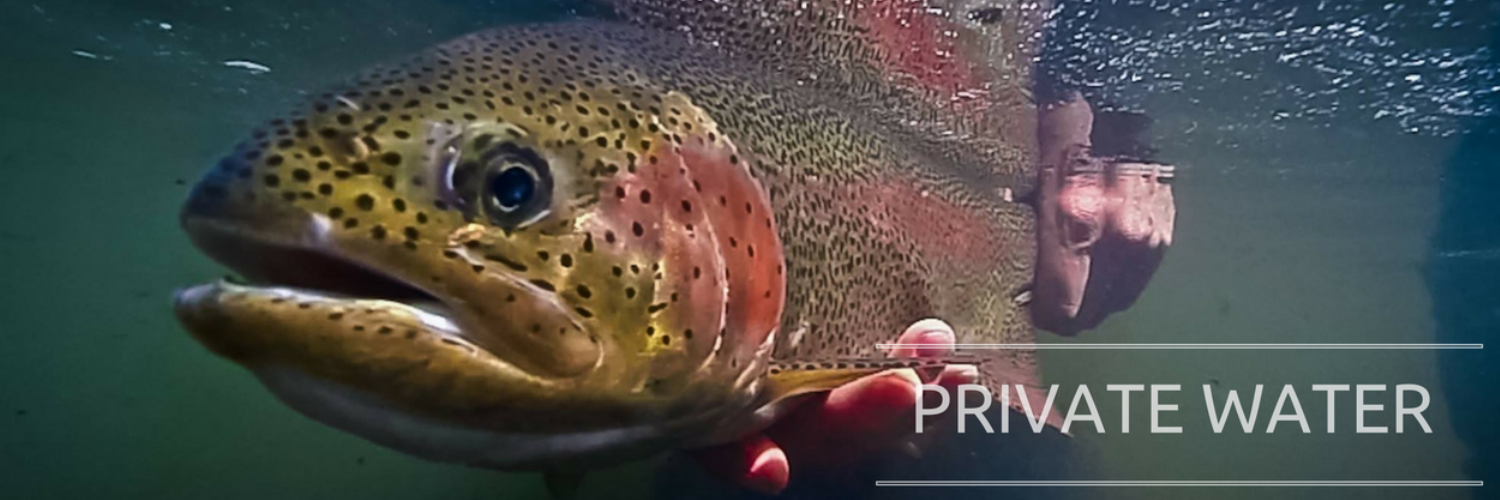 Rainbow Trout Under Water Private