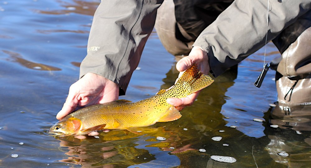 Eagle river fishing reports eagle river co conditions for Colorado river fishing report